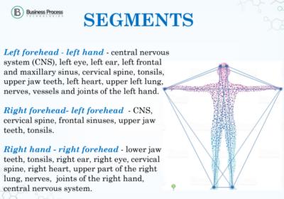 segments of the body