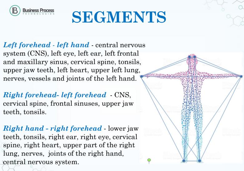 segments for bioresonance testing